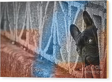 French Bulldog  Wood Print by Marvin Blaine