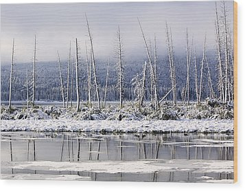 Fresh Snowfall And Bare Trees Wood Print by Ken Gillespie