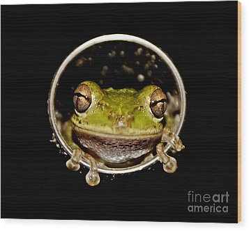 Wood Print featuring the photograph Frog by Olga Hamilton