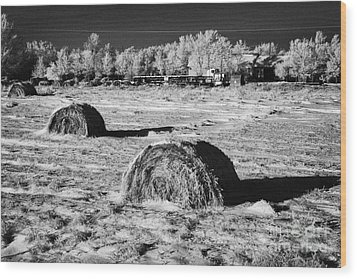 frozen snow covered hay bales in a field Forget Saskatchewan Canada Wood Print by Joe Fox