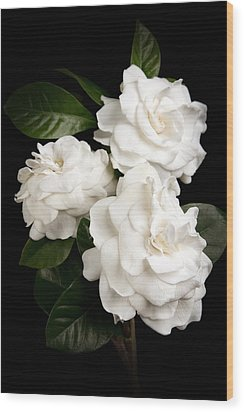 Gardenia Wood Print by Brad Grove