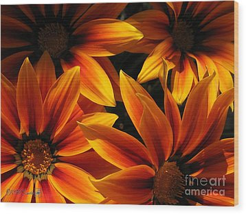 Wood Print featuring the photograph Gazania Named Kiss Orange Flame by J McCombie
