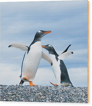 Gentoo Penguins Wood Print by Konstantin Kalishko