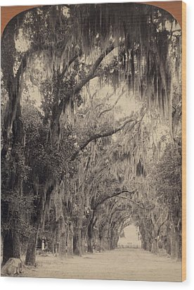 Wood Print featuring the painting Georgia Oak Trees, C1887 by Granger