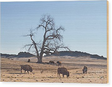 Give Me A Home Where The Buffalo Roam Wood Print by James BO  Insogna