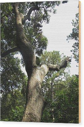 Gnarled Tree 2 Wood Print by Cathy Lindsey