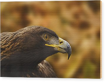 Wood Print featuring the photograph Golden Eagle  by Brian Cross