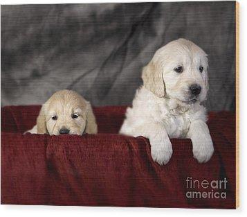 Golden Retriever Puppies Wood Print by Angel  Tarantella