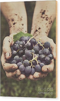 Grapes Harvest Wood Print by Mythja  Photography