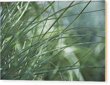 Grass Abstract Wood Print by Sabina  Horvat