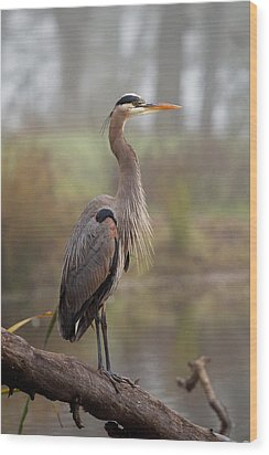 Great Blue Heron Wood Print by Doug Herr