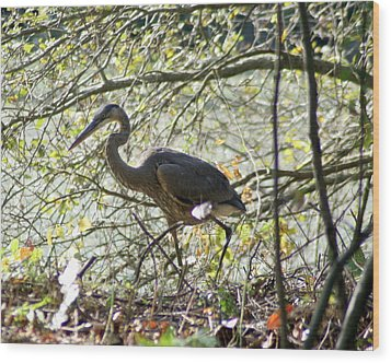 Wood Print featuring the photograph Great Blue Heron In Bushes by Karen Silvestri
