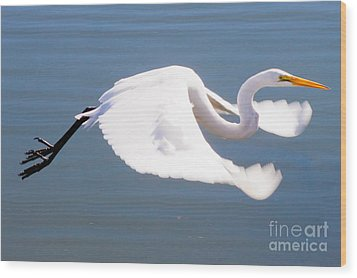 Great Egret In Flight Wood Print by Thomas Marchessault