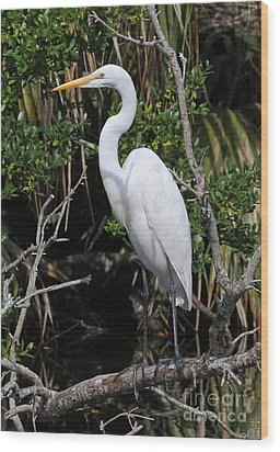 Great Egret Perched In Fallen Tree Wood Print by Kevin McCarthy