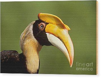 Great Hornbill Wood Print by Art Wolfe