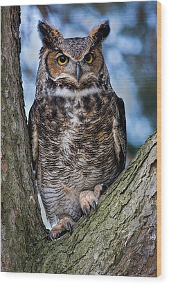 Great Horned Owl Wood Print by Dale Kincaid