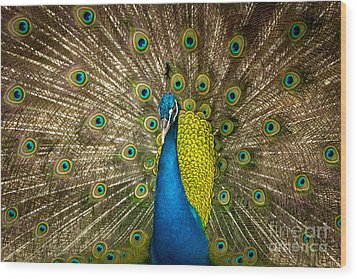Wood Print featuring the photograph Green Beautiful Peacock by Tosporn Preede