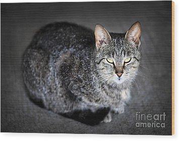 Grey Cat Portrait Wood Print by Elena Elisseeva