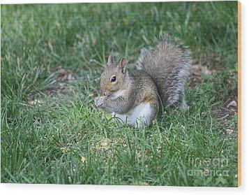Grey Squirrel Wood Print by Lori Tordsen