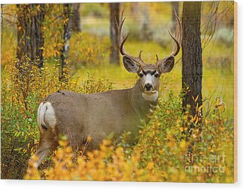 Wood Print featuring the photograph Gros Ventre Buck by Aaron Whittemore