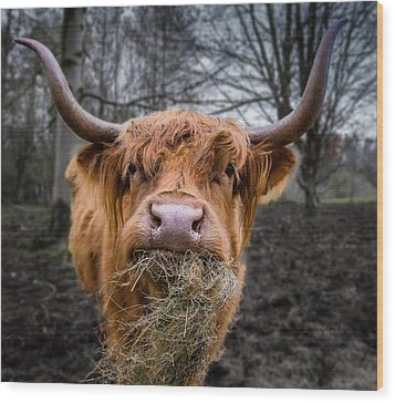 Highland Cow Wood Print by Fiona Messenger