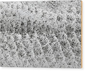 Hoarfrost 14 Wood Print by Will Borden