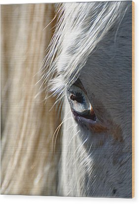 Horse Eye Wood Print