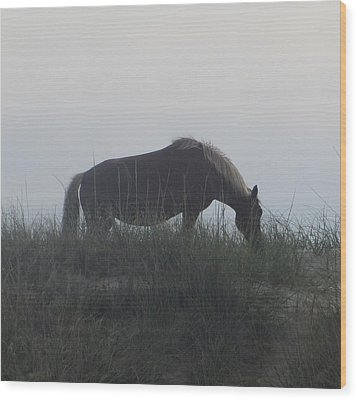Horses Of Corolla 5 Wood Print by Cathy Lindsey