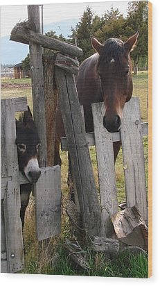 Wood Print featuring the photograph Horsing Around by Athena Mckinzie