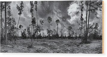 Houston Memorial Park Drought Wood Print by Joshua House