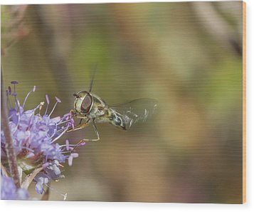Wood Print featuring the photograph Hoverefly - Syrphus Vitripennis by Jivko Nakev