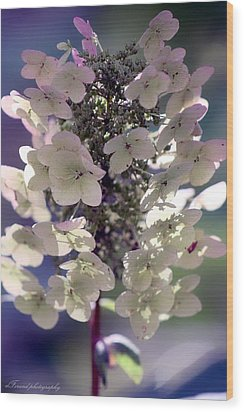 Wood Print featuring the photograph Hydrangea  by Debra Forand