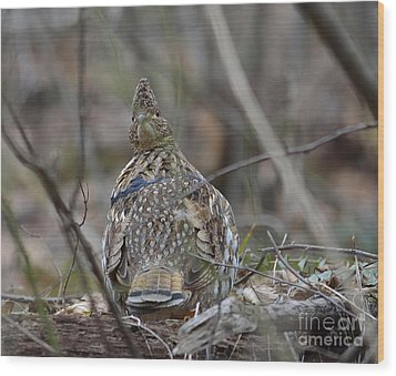 Wood Print featuring the photograph I See You by Randy Bodkins