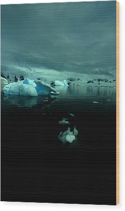 Wood Print featuring the photograph Icebergs by Amanda Stadther