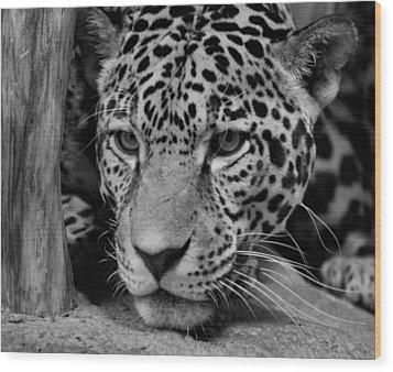 Jaguar In Black And White II Wood Print by Sandy Keeton