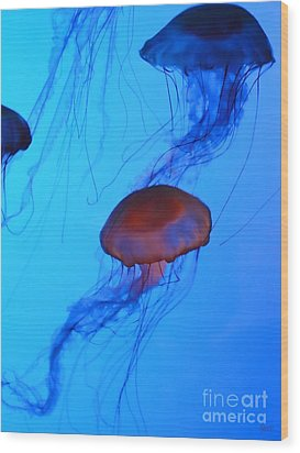 Jellyfish 4 Wood Print by Jeff Breiman