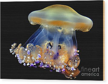 Jellyfish Wood Print by Wernher Krutein