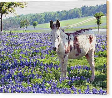 Jesus Donkey In Bluebonnets Wood Print by Linda Cox