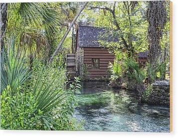 Juniper Springs Wood Print by Bob Jackson