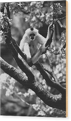Just Hanging Out Wood Print by Retro Images Archive