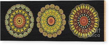 Kaleidoscope Ernst Haeckl Sea Life Series Triptych Wood Print by Amy Cicconi