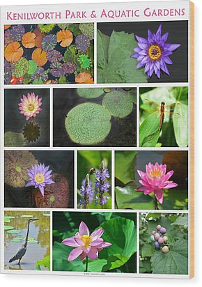 Kenilworth Aquatic Gardens Wood Print