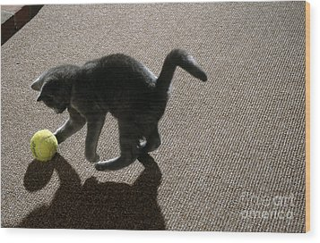 Kitten Playing With Ball Wood Print by James L. Amos