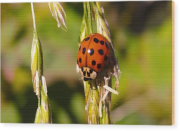 Wood Print featuring the tapestry - textile Lady Bug by Dennis Bucklin