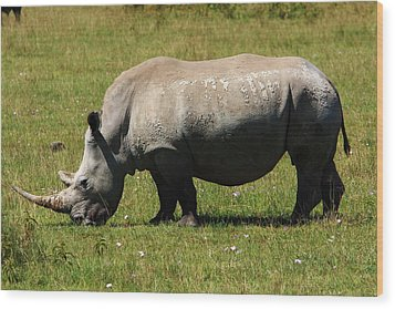 Lake Nakuru White Rhinoceros Wood Print by Aidan Moran