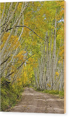 Leaning Aspens Wood Print by Marta Alfred