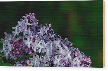 Lilac 4 Wood Print