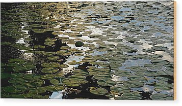 Lilly Pad Abstraction Wood Print