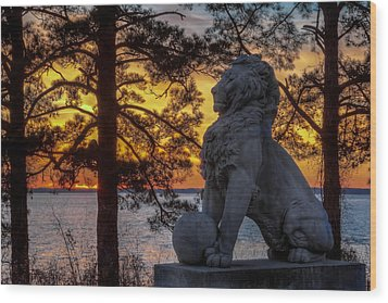 Lion At Sunset Wood Print by Jerry Gammon
