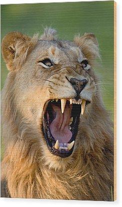 Lion Wood Print by Johan Swanepoel
